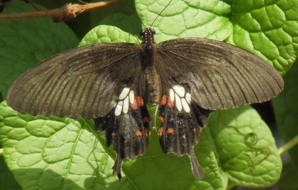 Schmetterlinge am Flughafen