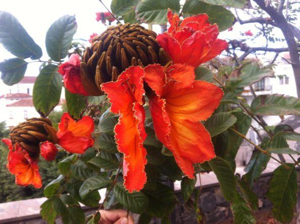Die schönsten Pflanzen aus aller Welt