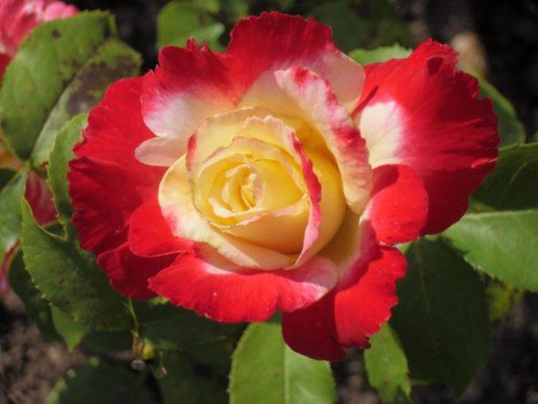 Gärten der Liebe und Glückseligkeit